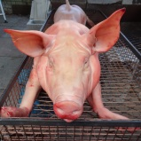 Pig for Fire and Salt BBQ and Almost Famous Manchesters Pigout